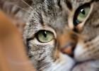 Cat Lovers   Triste journée
