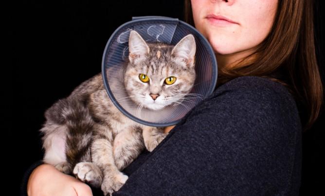 Cat Lovers | L'entonnoir de la honte